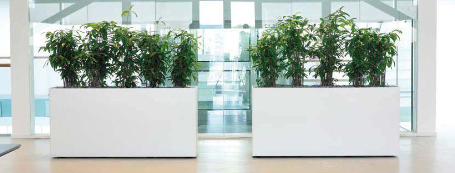 Hydrokultur m nchen raumbegr nung pflanzenpflege for Hydrokultur shop