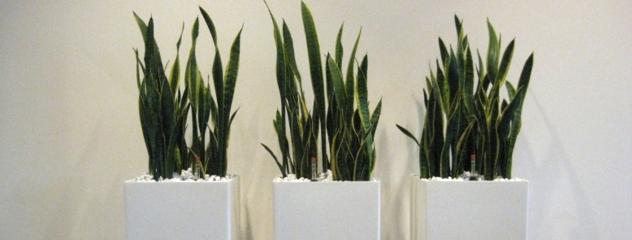 hydrokultur m nchen raumbegr nung pflanzenpflege hydrokultur landshut. Black Bedroom Furniture Sets. Home Design Ideas