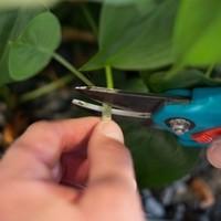 Markus Wegner Hydrokultur Pflanzen schneiden